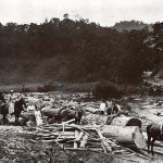 Logging in a mountain hollow, Johnson County, Kentucky. Courtesy of Val McKenzie.